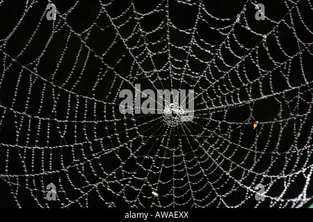 Spider web in the rainforest of Soberania national park, Republic of Panama. - Stock Photo