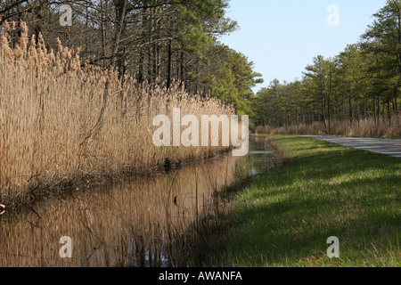 Roadside Wetlands in the springtime - Stock Photo