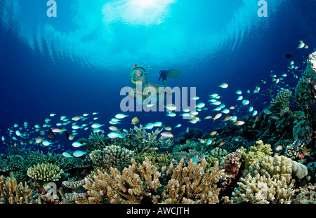 Snorkeling over Coral Reef Maldives Indian Ocean Meemu Atoll - Stock Photo