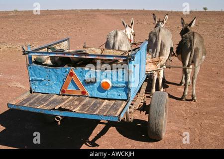 Donkeys with Donkey cart, South of Namibia, Africa - Stock Photo