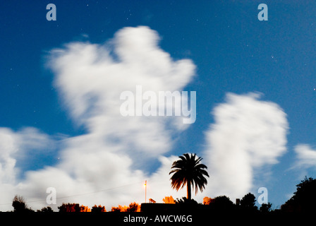 Spain Canary Islands La Palma La Tosca lookout drifting night clouds in moonshine and palm tree - Stock Photo