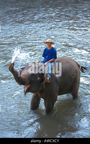 elephant camp near Chiang Dao Thailand - Stock Photo