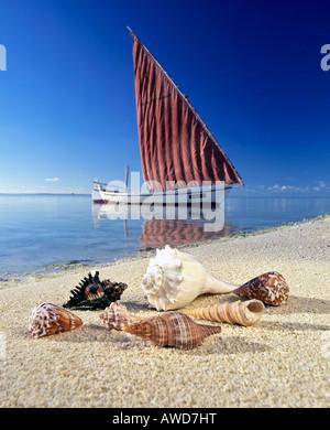 Shells on the beach, sailboat, calm lagoon, Maldives, Indian Ocean - Stock Photo