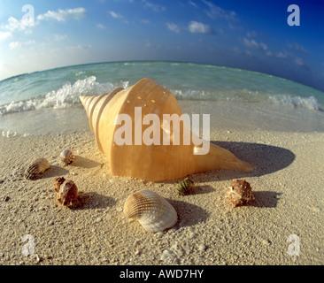 Shells on the beach, fisheye lens, Maldives, Indian Ocean - Stock Photo