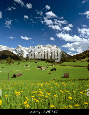 Tonihof Wildlife Park, Flower meadow in spring, Wetterstein Range, Mittenwald Forest, Upper Bavaria, Bavaria, Germany, - Stock Photo