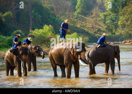 elephant camp near Chiang Dao Thailand - Stock Photo