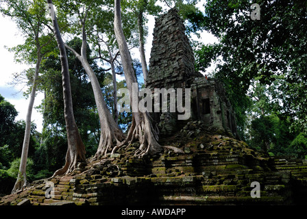 Rainforest growing over the ruins of Preah Paliliay tempel in the ancient city Angkor Thom, Cambodia - Stock Photo