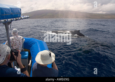 Whale watchers get a close up look at a humpback whale, Megaptera novaeangliae, Hawaii. - Stock Photo