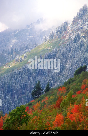 A stunning scene in American Fork canyon, Utah, USA. Here on Mt. Timpanogos 2 seasons meet w/ colors and a dusting - Stock Photo