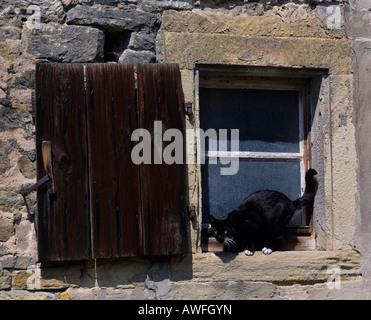 Cat lurking on windowsill - Stock Photo