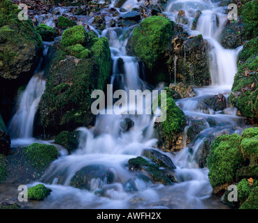 Moss-covered rocks in a forest stream, North Rhine-Westphalia, Germany, Europe - Stock Photo