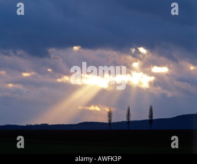 Rays of sunlight shining through clouds and three poplars - Stock Photo