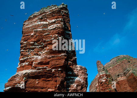 Famous red rock Lange Anna - Long Anna - Tall Anna with nesting seabirds - bird sanctuary - Heligoland, Schleswig - Stock Photo