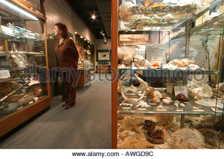 Alabama, AL, South, Morgan County, Decatur, Cook's Natural Science Museum, history, collections, exhibit exhibits - Stock Photo
