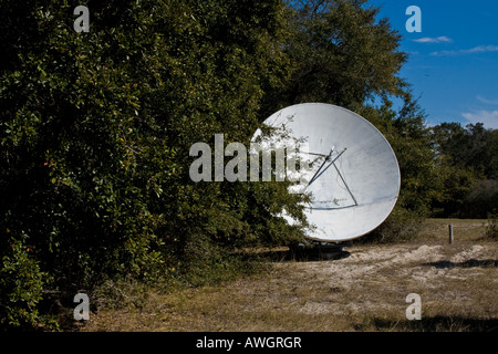 One satellite dish antenna, partially obscured by trees,  pointing towards the sky, Jekyll Island, Georgia, USA - Stock Photo