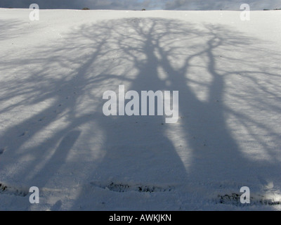 shadows of sycamore and ash trees cast on dazzling sunlit snow in winter UK country - Stock Photo