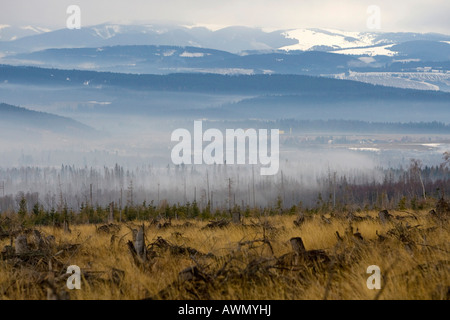 Environmental damage caused by storms and forest fires in 2005, High Tatras, Slovakia, Europe - Stock Photo