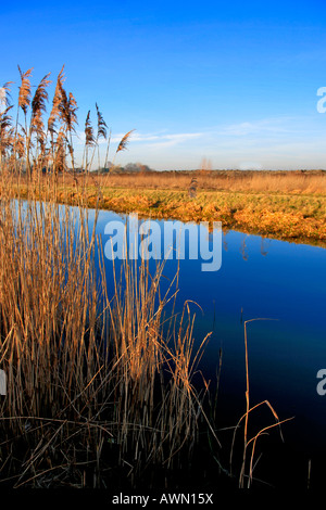 Fenland Reedbeds Whittlesey Washes National Nature and Bird Reserve Cambridgeshire England Britain UK Europe East - Stock Photo