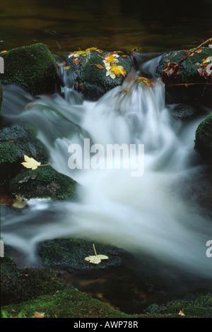 Kleine Ohe stream in autumn, Nationalpark Bayerischer Wald (Bavarian Forest National Park), Bavaria, Germany, Europe - Stock Photo