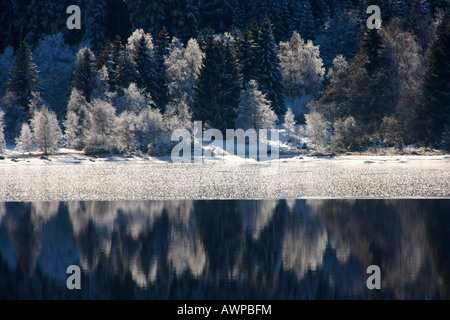 Frost-covered trees reflected on the half-frozen surface of Schluchsee (Schluch Lake), Black Forest, Baden-Wuerttemberg, - Stock Photo