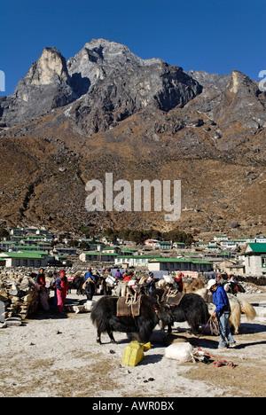 Tibetan yak caravane at Sherpa village Khumjung, holy mountain Khumbi Yul Lha (Khumbila, 5761), Sagarmatha National - Stock Photo