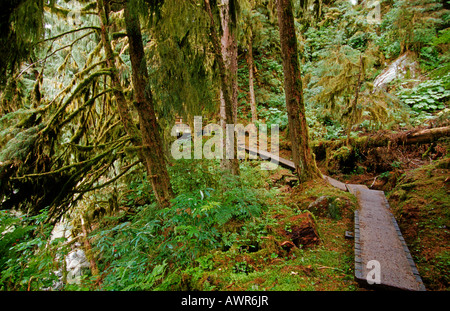 Footpath through Tongass National Forest, the world's largest temperate rainforest, southeastern Alaska, USA - Stock Photo