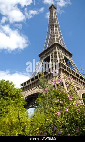 Eiffel Tower in Paris, France seen through bouganvilleas - Stock Photo