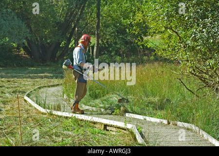 Man cutting grass using Strimmer, Dorset, UK - Stock Photo