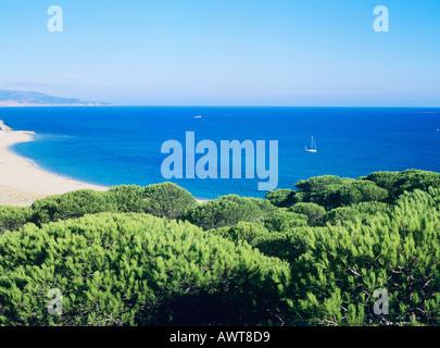 Pine forest, unspoilt beaches and sailing in the Atlantic, Andalucia, Spain. Costa de la Luz. Barbate - Stock Photo