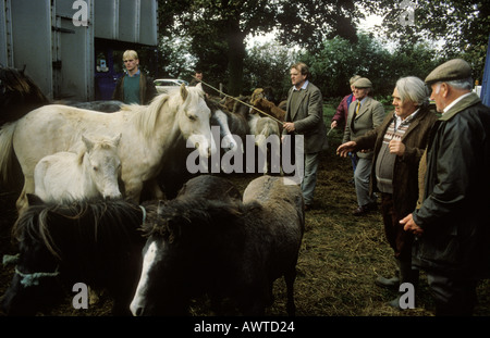 Horses at Stow on the wold gypsy horse fair Stock Photo, Royalty ...