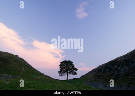 Sycamore Gap on Hadrians Wall, near Once Brewed, Northumberland, England, UK - Stock Photo