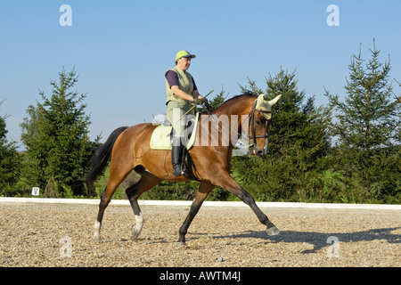 Dressage riding on back of a 'Bavarian breed' horse - Stock Photo