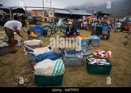 Men with crates of fresh fish caught at Puerto Lopez fishing Harbour Ecuador South America - Stock Photo