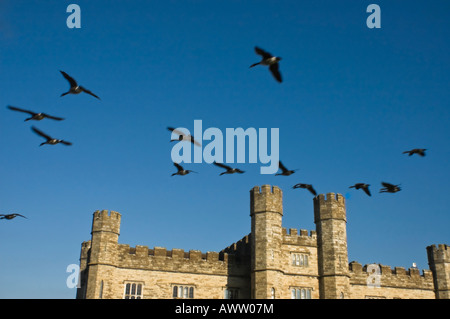 Birds flock above Leeds Castle Kent England UK - Stock Photo