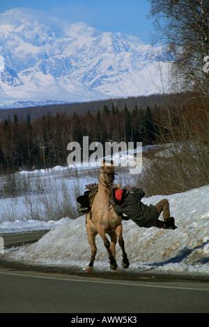 Man Falling Off Bucking Horse At Rodeo Stock Photo