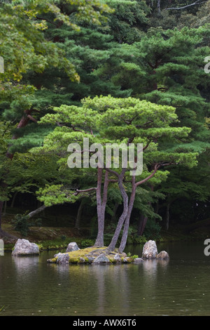 Pine tree on island in pond, Kinkakuji Temple (also known as Golden Pavilion), Kyoto, Japan - Stock Photo