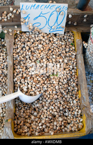 Edible snails on sale at the typical market of Ballarò Palermo Italy - Stock Photo