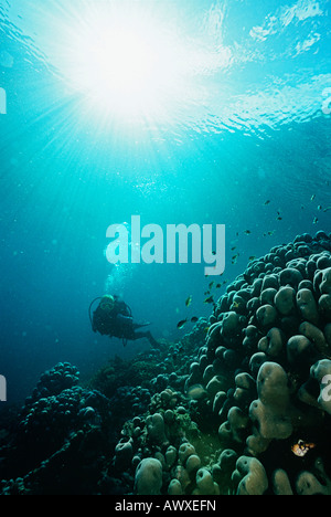 Raja Ampat, Indonesia, Pacific Ocean, scuba diver in shallows with rays of light streaming from surface - Stock Photo