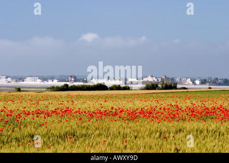 View across the Somme estuary towards Le Crotoy from Le Cap Hornu with poppies in corn field on sunny day - Stock Photo