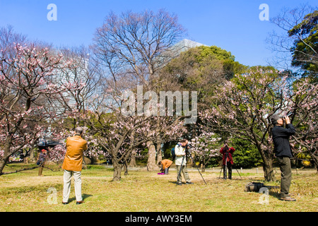 Many photographers taking photos of the first plum trees to bloom in early spring in Hama Rikyu Garden in Tokyo - Stock Photo