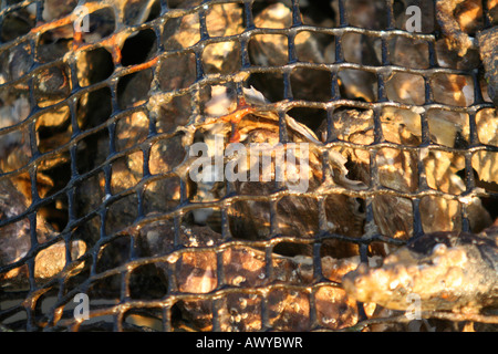 Oysters growing in rope mesh bags 'pillow cases' on an oyster park in Normandy France - Stock Photo
