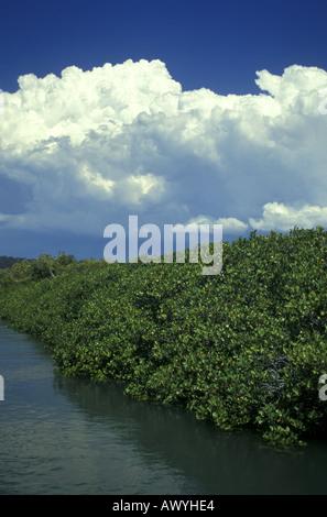 mangrove swamp at high tide in cairns queensland. Black Bedroom Furniture Sets. Home Design Ideas