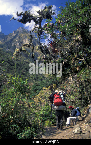 Ecotourists hiking through cloud forest trail to Dead Woman Pass the highest point on the Inca Trail into Machu - Stock Photo