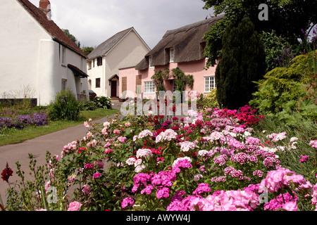 Somerset Dunster flower filled cottage gardens in Park Street - Stock Photo