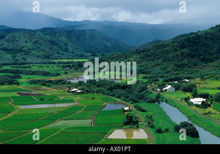 Taro Fields in Hanalei Valley Hanalei Valley Overlook Kauai Hawaii USA August 1996 - Stock Photo
