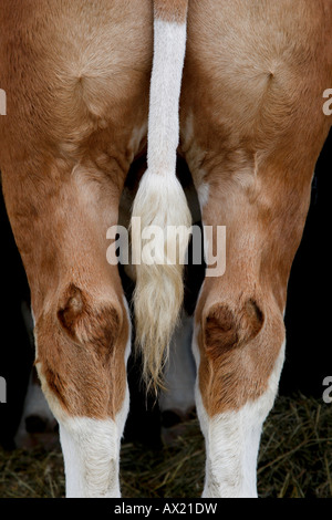 Detail of an ox - Stock Photo