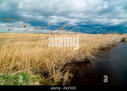 Harvests reeds, Neusiedlersee Lake, Burgenland, Austria, Europe - Stock Photo