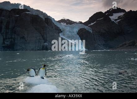 Antarctica South Georgia Island UK King Penguins Aptenodytes patagonicus on icebergs calved from tidewater glaciers - Stock Photo
