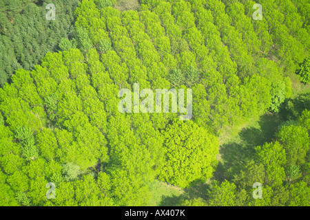 Aerial view of woodlands consisting of Coniferous Trees - Stock Photo