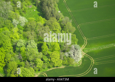 Aerial view of woodlands consisting of Deciduous and Coniferous Trees at the edge of a field - Stock Photo